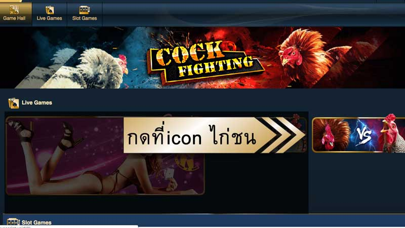 5.กดที่รูปไก่ชน ไก่ชน cock fighting